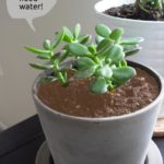 Plant Needs Water